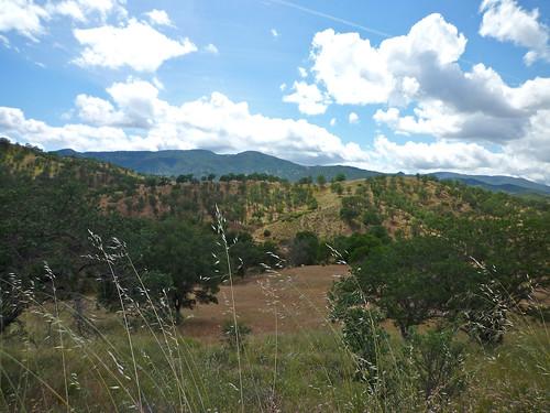 rolling oak grasslands