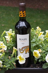Maipe 2009 Malbec