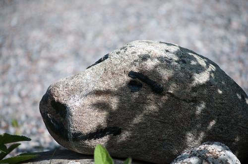 Stenbjörn