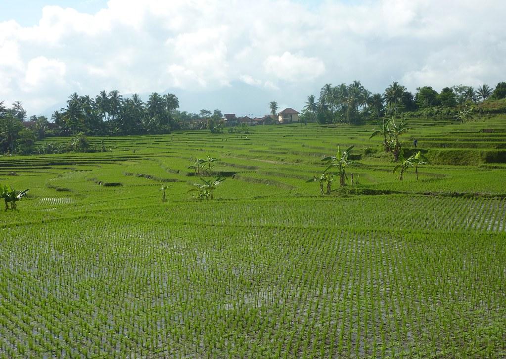 Java-Bandung-Yogyakarta (20)