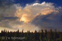 Ominous Sky (johnfuj) Tags: sky cloud canada nature ecology rain weather clouds forest shower scenery skies can alberta land rainstorm northamerica environment thunderstorm carstairs environmentalism rainfall ecosystem thunderhead westerncanada rainshower prairieprovinces canadianprairies nikonp6000