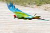 peroquet (franchab) Tags: wwwfranchabphotographefr