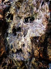 vegetal chaos (Monch_18) Tags: wood tree art texture strange face dark pareidolia skull raw chaos head mort fear sombre madness nightmare artbrut rotten root arbre bizarre montreuil grotesque bois tte dreamcatcher visage racine monch crne trange peur terreur folie pourrie inquitant matire expressif pareidolie