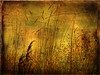 PICKING WILD FLOWERS (kluthphotos) Tags: flowers photos tag textures wildflowers hay photoshopelements idream dragondaggerphoto dragondaggeraward artistictreasurechest yourwonderland selectbestfavorites selectbestexcellence sbfmasterpiece imageourtime kluthphotos lenabemtexture