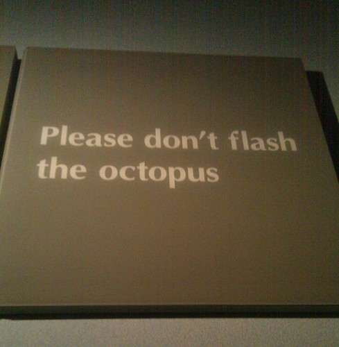 Please don't flash the octopus
