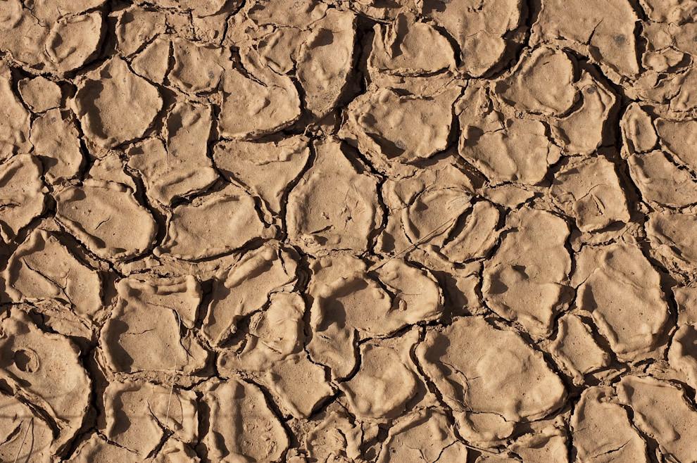 Grietas en el suelo producido por la sequía en la zona de Boquerón, terreno característico del Chaco Paraguayo (Elton Núñez - Boquerón, Paraguay)