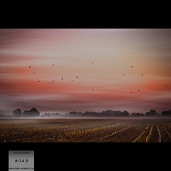morning fog [049/365] (pkuhnke) Tags: morning birds fog sunrise nebel feld vgel sonnenaufgang morgennebel 049 stoppelfeld frhnebel 365days 365project