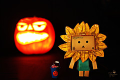 (explore) Halloween 2010 (Senzio Peci) Tags: italy halloween japan pumpkin scary amazon italia horror sicily treat trick giappone sicilia zucca danbo patern danboard intothedeepofmysoul