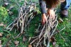 Stack... (Dawn Suzette) Tags: homeschool kindling unschool giftsfromnature newseriesoveratthemagnifyingglass