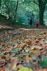 3-11-10-4 (Malcolm Anderson) Tags: autumn trees national trust beech lewesdon