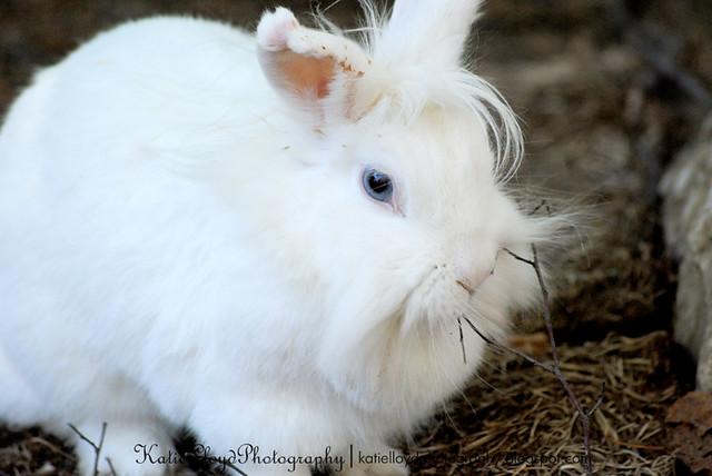 Deanna Rose Bunny