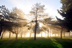 Hüzme (Atakan Eser) Tags: mist tree weather misty fog scene istanbul sis sisli manzara ağaç çamlıca dsc7479