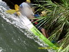 Kayak Turia 8 km 24/06/17 (Valencia Adventure) Tags: río kayaking naturaleza descenso turia aventuras para parque natural kayak valencia ribarroja turismo deportes de agua iniciación aguas bravas
