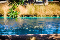 Tree Branch By the Water (Cole Eaton Photography) Tags: lake pond water nature natural arizona desert park leaf green grass tall warm sunny sunshine shade ripple bokeh tree branch leave leafs leaves peace serene calm breeze
