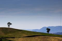 *** (Paolo.Venarucci) Tags: canon natura color eos 600d gualdo gualdotadino nature landscape umbria green estate tamron helio helios helios442258mm