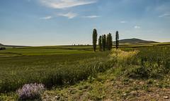 kaçış (yasar metin) Tags: life light landscape hayat huzur ortaköy field sky
