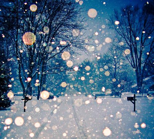 フリー写真素材, 自然・風景, 雪, 樹木, 道, アメリカ合衆国,
