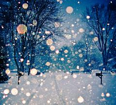 [フリー画像] 自然・風景, 雪, 樹木, 道, アメリカ合衆国, 201101171900