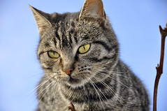 Cat - Matza - Pisi (AragianMarko) Tags: abigfave