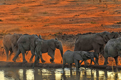 More Dusty Elephants (jay_kilifi) Tags: africa red dawn kenya safari soil elephants dust tsavo naturesfinest tsavowest kilaguni anawesomeshot