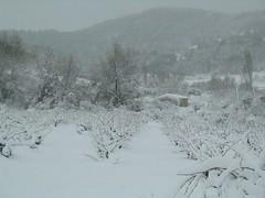 nevada gener 2010