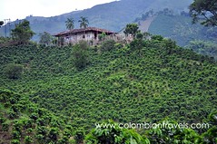 Coffee plantations, Colombia