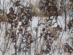 Montague Plains (jnoc) Tags: snow montague montagueplains