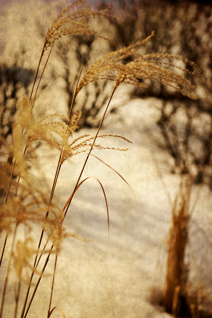 Winter Grass with Texture added