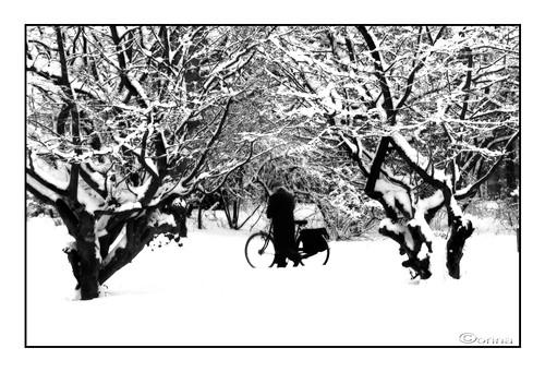 snow nikon oldman soe corin mygearandme