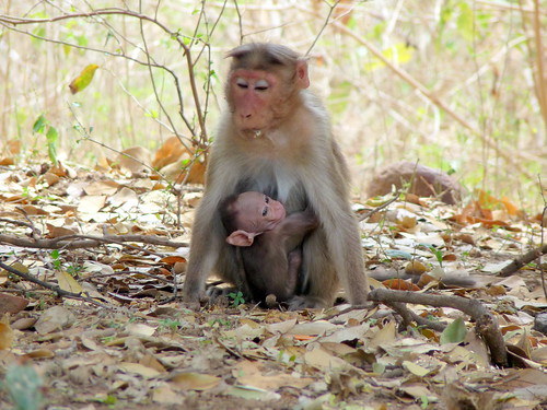 Mother and child monkeys