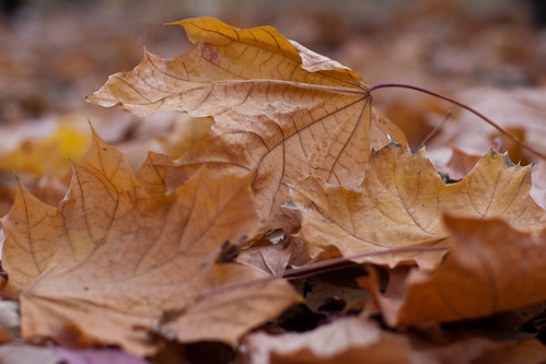 Close-up of autumn leaves fallen to the ground