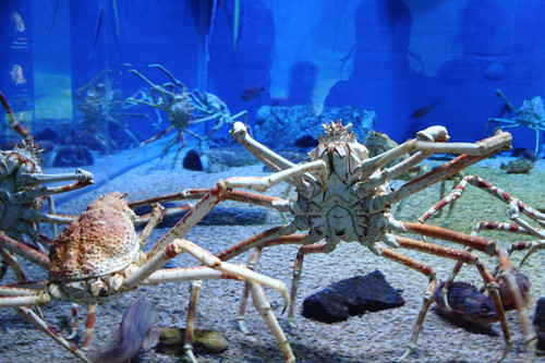 Crabs in the Osaka Aquarium