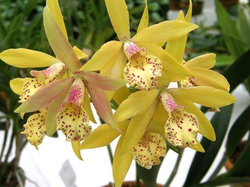 orquideas 21