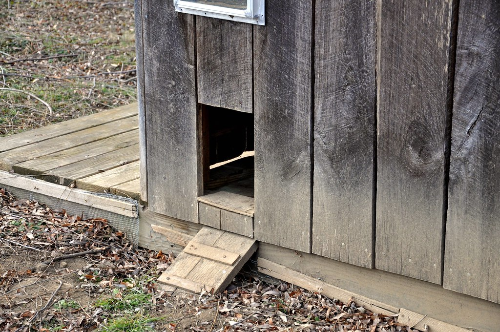 Chicken Coop door & ramp