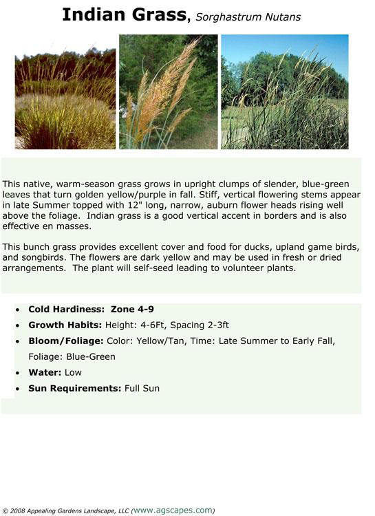 Indian Grass.jpg