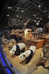 Tokyo 2009 - 上野 -  國立科學博物館 (1)