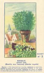 legume3 basilic