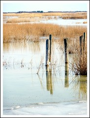 Frozen Marsh: Golden Grass and Reflections in the Stillness (Stephanie'sBestShots) Tags: blue winter sky white ice nature water grass reflections gold frozen massachusetts newengland marsh pilings february stillness newbury plumisland twop greatmarsh mtrtrophyshot