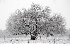 Fort Worth Texas Botanic Japanese Garden Snow Winter Flakes Storm Lake Tea House Arch Bridge Trees  DSC_0988 (Dallas Photoworks) Tags: bridge trees winter white house lake snow storm black garden japanese texas arch tea fort record botanic worth dfw snowfall flakes blizzard 2010
