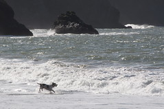 Dog Running on Bake Beach Photo