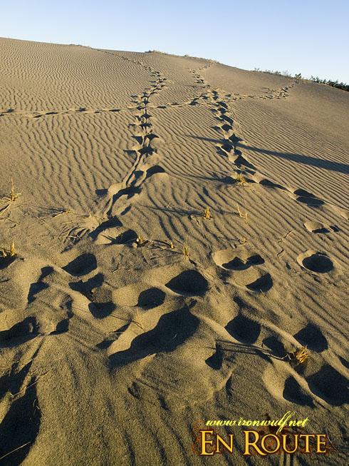 Lakbay Norte Sand Prints