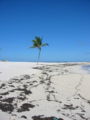near Paradelle (Ken Ronkowitz) Tags: ocean beach water sand palm bahamas