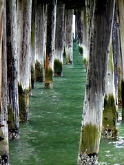 Pillars at Pillar Point (*~Dawn~*) Tags: california ca pier pilings pillars halfmoonbay piles pillarpoint princetonbythesea underthepier pillarpointharbor halfmoonbayca pillarpointhalfmoonbay