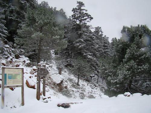 Ruta Paseo de los Pinsapos