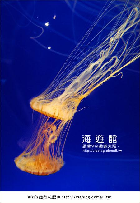 【via關西冬遊記】世界最大極的水族館~大阪海遊館27