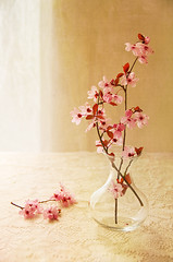 Plum blossoms (cbfarrell2003) Tags: new pink stilllife flower nature floral beautiful vertical spring soft pretty blossom lace feminine object group plum peaceful romance fresh spray indoors serenity vase romantic buds serene bouquet concept delicate simple beginnings femininity copyright2009colleenfarrell