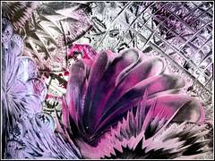 http://farm5.static.flickr.com/4055/4387600066_56e148afc0_m.jpg