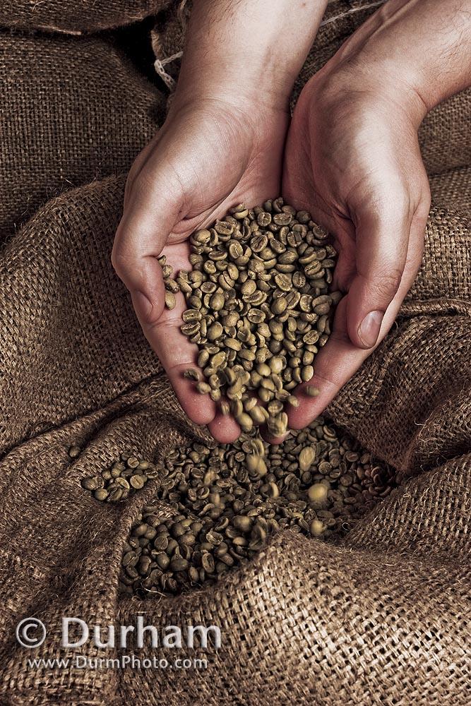 coffe beans (Coffea arabica)