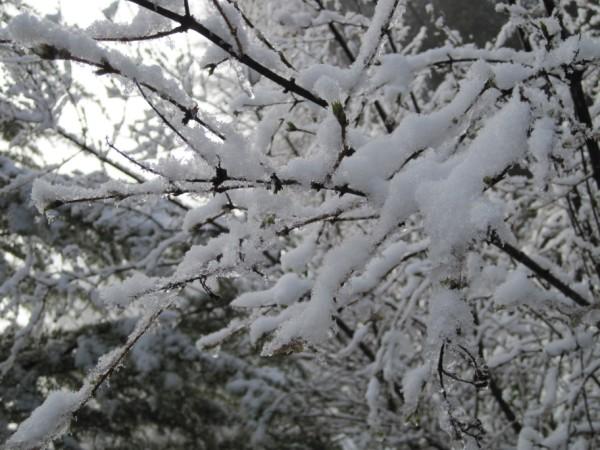snow2010 042 (600 x 450)
