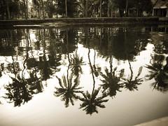 IMG_1156-1 (u1crazyfoo) Tags: india kerala backwaters alleppey